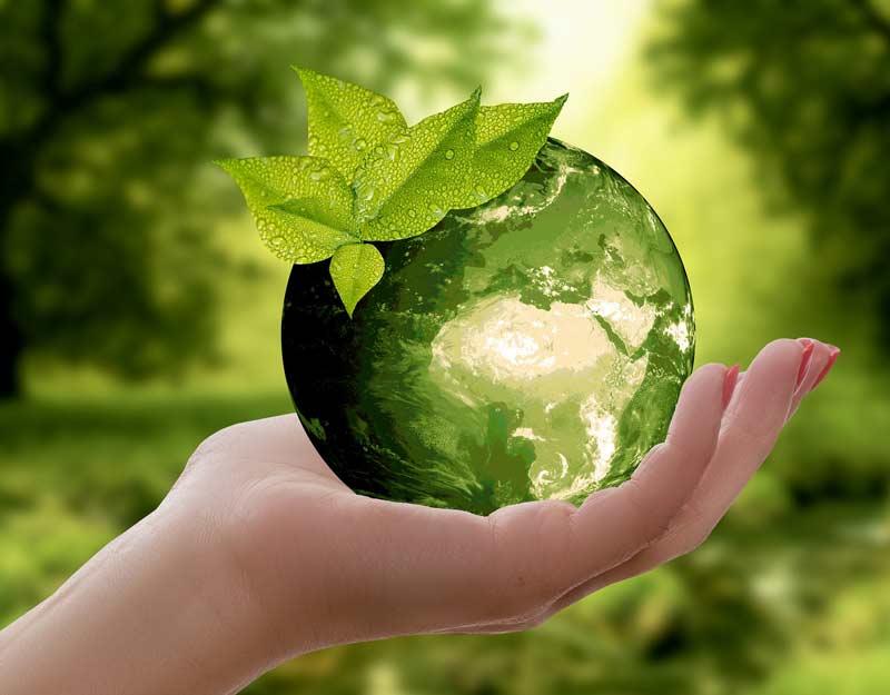 Noleggio cassoni per ambiente più pulito
